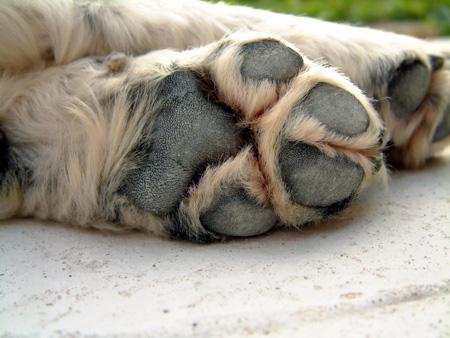 Лапы собак страдают от соли