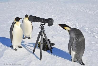 Фотооптика – и базис, и надстройка