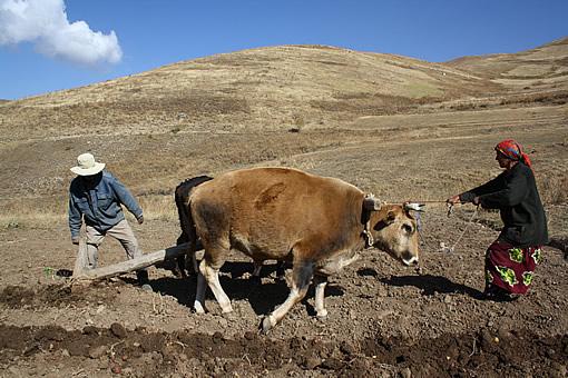 Арийцы туркестанских кишлаков