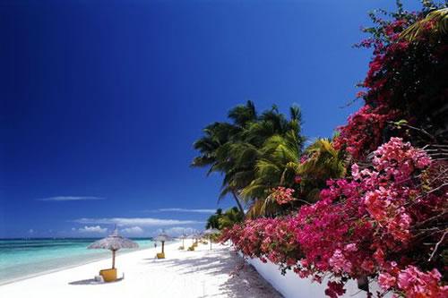 Поездка на Маврикию обернулась мошенничеством