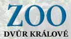 Директор зоопарка обвинён в вывозе белых носорогов (в мире их насчитывается всего 24 особи)