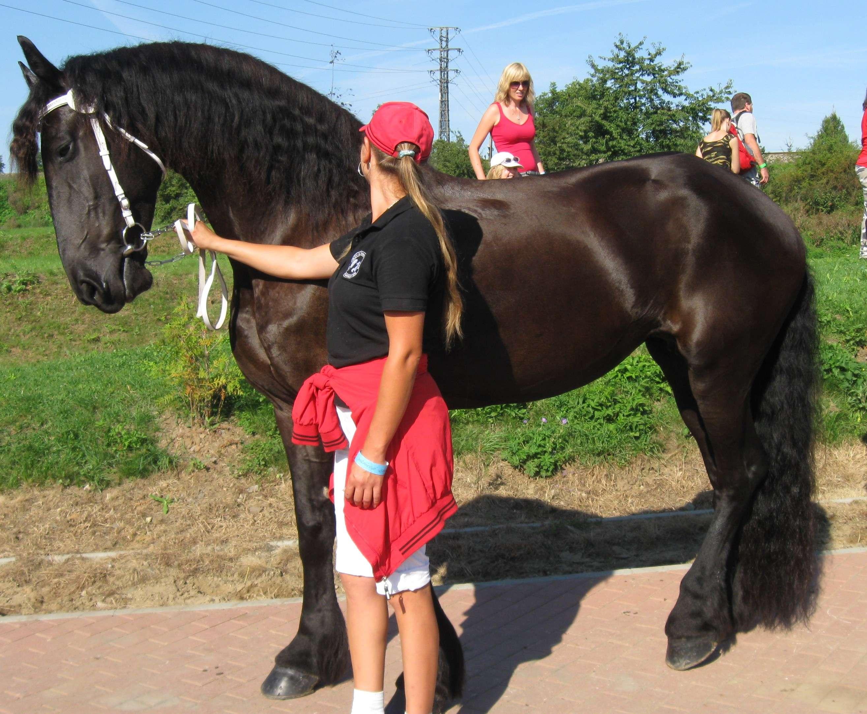 Чешские лошади испанских кровей