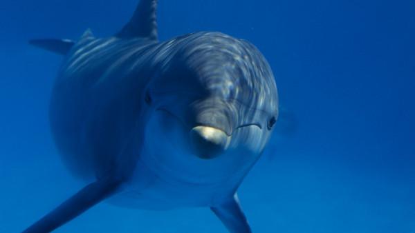 Дельфины из Турции будут привезены в Прагу в апреле 2013