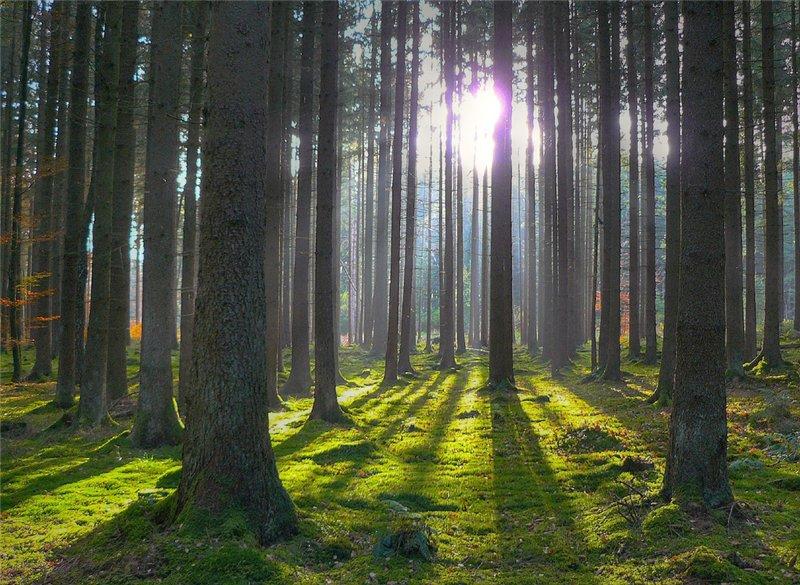 Чешские и белорусские лесоводы встретятся в Праге