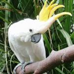 В новом павильоне будут жить какаду, ара и другие виды попугаев