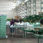 Бумажная фабрика «Герой труда»
