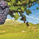 Цены на вино выросли во многих странах Европы