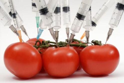 ГМО-гигант