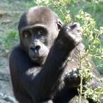 Пражский зоопарк организует концерты