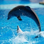 Тем, кто не увидел дельфинов в Праге, вернут деньги