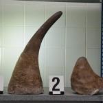 Стоимость найденных рогов - 7 млн крон