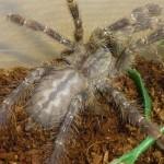 Ядовитых пауков нашли в мусорном контейнере