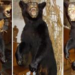 Чучело медведя оказалось дорогим украшением для владельца ресторана