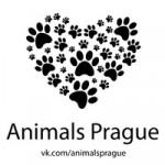 Animals Prague/Животные Прага
