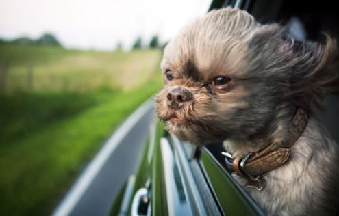 В путешествие с животным