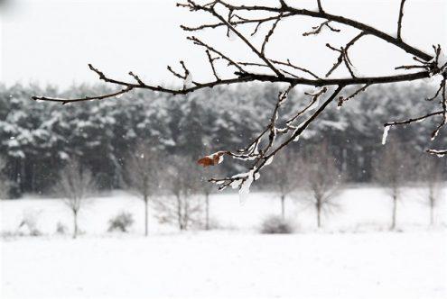 В Чехии ожидается похолодание
