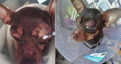 Чешские полицейские выяснили, кто облил собачку кислотой в Бланско
