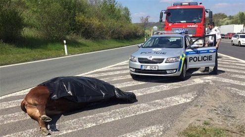 Сотрудники чешской полиции застрели двух быков