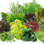 Свежая зелень: обед по-весеннему