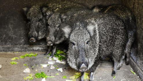 В Пражском зоопарке появились новые жители