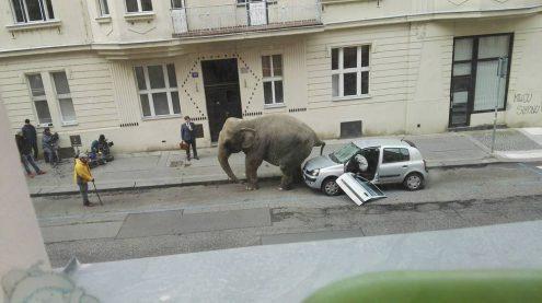 Огромный слон разгуливал по Праге