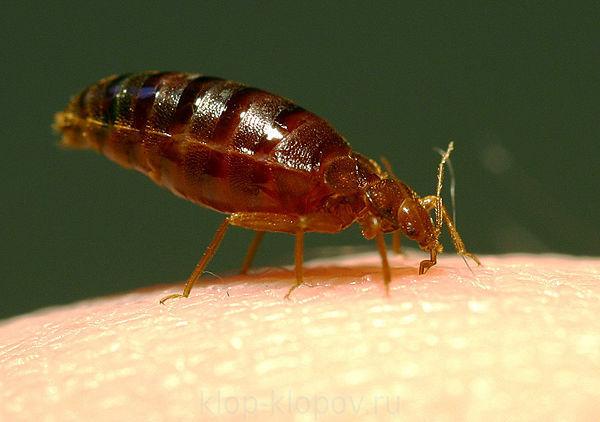 как проявляются паразиты в организме человека