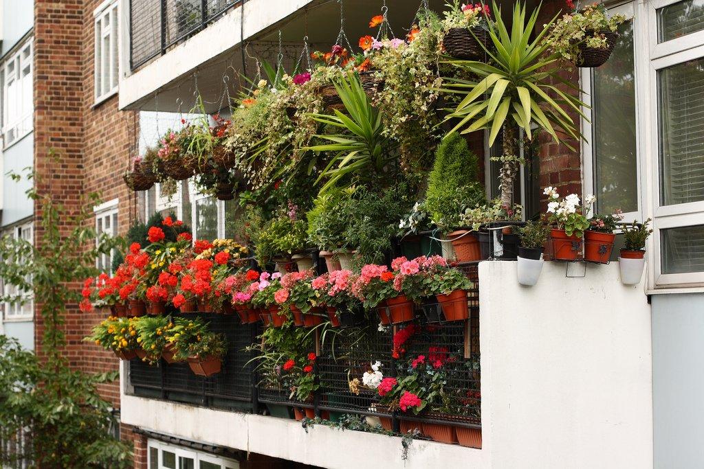 Идеи сада на балконе. как создать зеленый уголок прямо на ба.