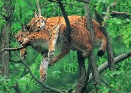 Животные Конго
