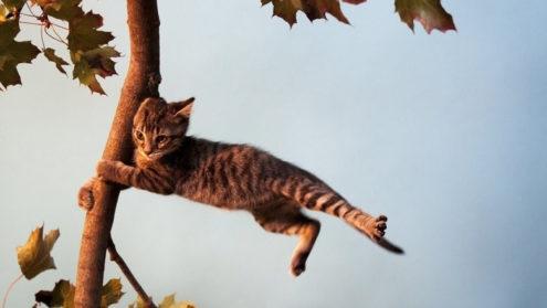 Остерегайтесь ветра в среду, он может порывами сломать деревья
