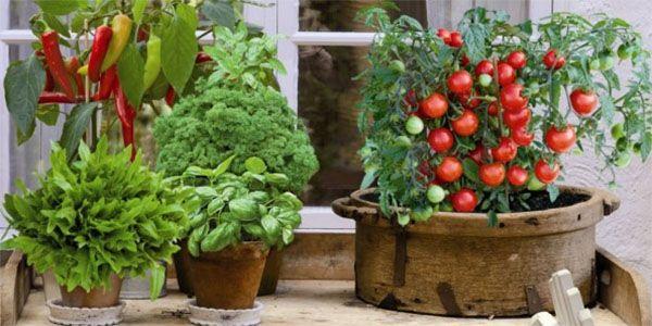 Подорожание в магазинах заставило чехов выращивать фрукты