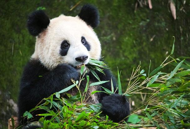 Пражский зоопарк получит от города 45 миллионов на покрытие убытков из-за вынужденного закрытия