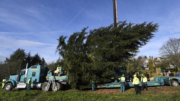 Зажигание елки в центре Праги будет онлайн
