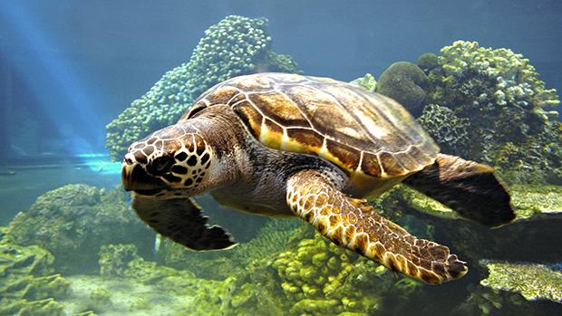 Медицинские отходы представляют опасность для океанов и животных
