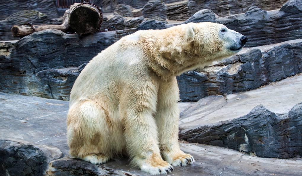 Зоопарки просят у правительства денег на содержание