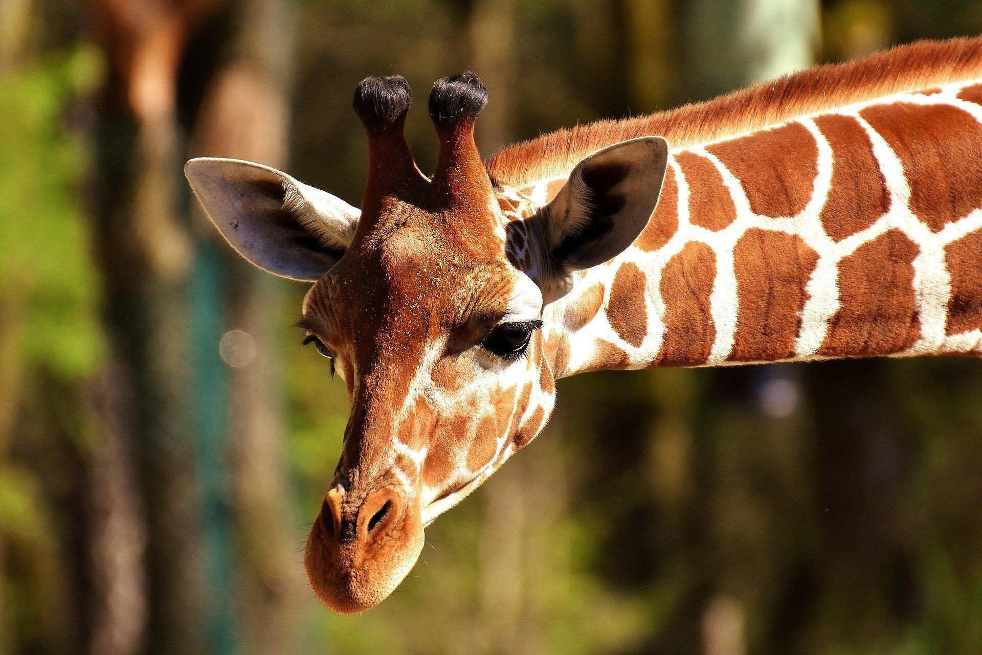 На корм животным в зоопарке выделено 80 миллионов крон