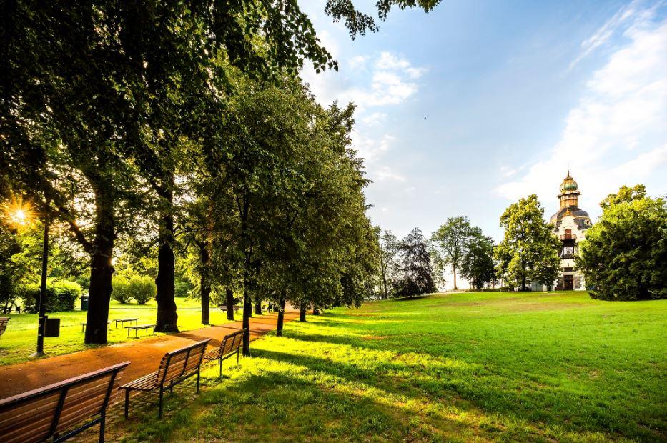 Прага 2 планирует посадить десятки деревьев на улицах и в парках